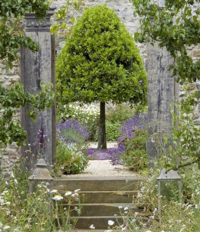 Cute K lteunempfindlich und ziemlich pflegeleicht der Lavendel im Garten ist ein echter Blickfang Jedenfalls sollte man mit dem schneiden aufpassen