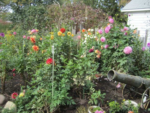 1000 images about dahlia wishlist on pinterest gardens fireflies and search - Comment planter des dahlias ...