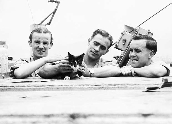 Simon (c. 1947 - 28 November 1949) was the ship's cat on the Royal Navy sloop HMS Amethyst. In 1949, during the Yangtze Incident, he received the PDSA's Dickin Medal after surviving injuries from a cannon shell, raising morale, and killing off a rat infestation during his service.
