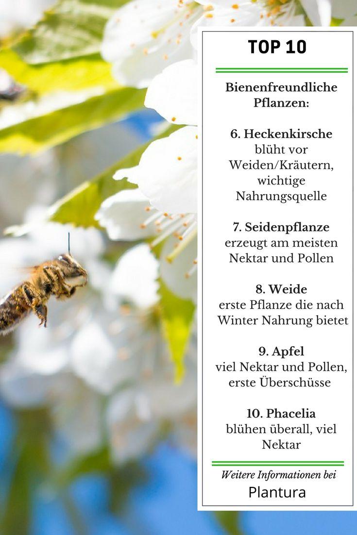 32 besten Bienen: retten & füttern Bilder auf Pinterest   Gärtnern ...