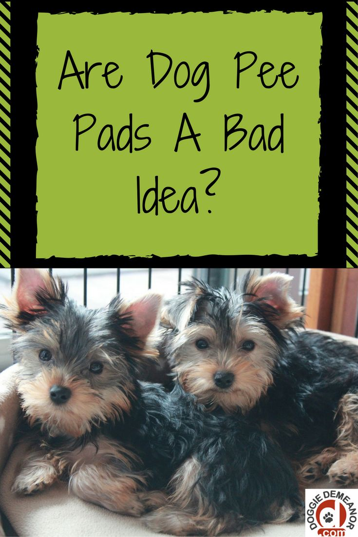 best 25+ dog pee pads ideas on pinterest | dog garden, dog care