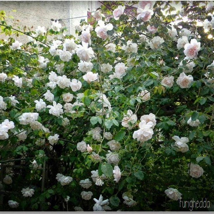 blog di giardinaggio per appassionati di giardino. Garden diy, giardino storico, mostre di giardinaggio, tutorial.