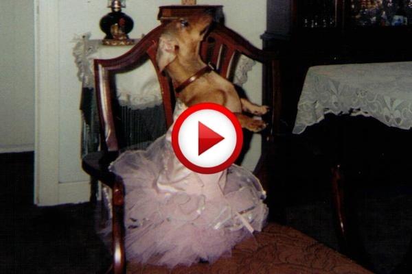 Dog Can Dance Salsa Video #animals, #dogs, #funny, #videos, #pinsland, https://apps.facebook.com/yangutu  www.rx4gigs.com