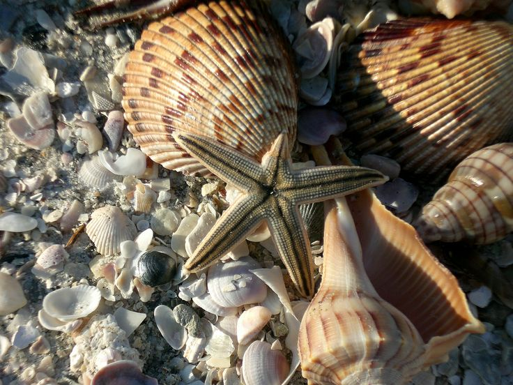 Shells on beach at Clearwater, Florida