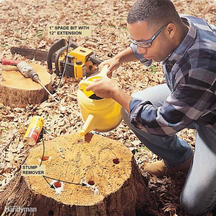 You can remove a stump by renting a power stump grinder, but another way is to buy a can of stump remover (available at most garden or home centers). Most brands are made of powdered potassium nitrate, which speeds up the rotting process. Read more on how to remove a tree stump.