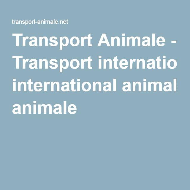 Transport Animale - Transport international animale