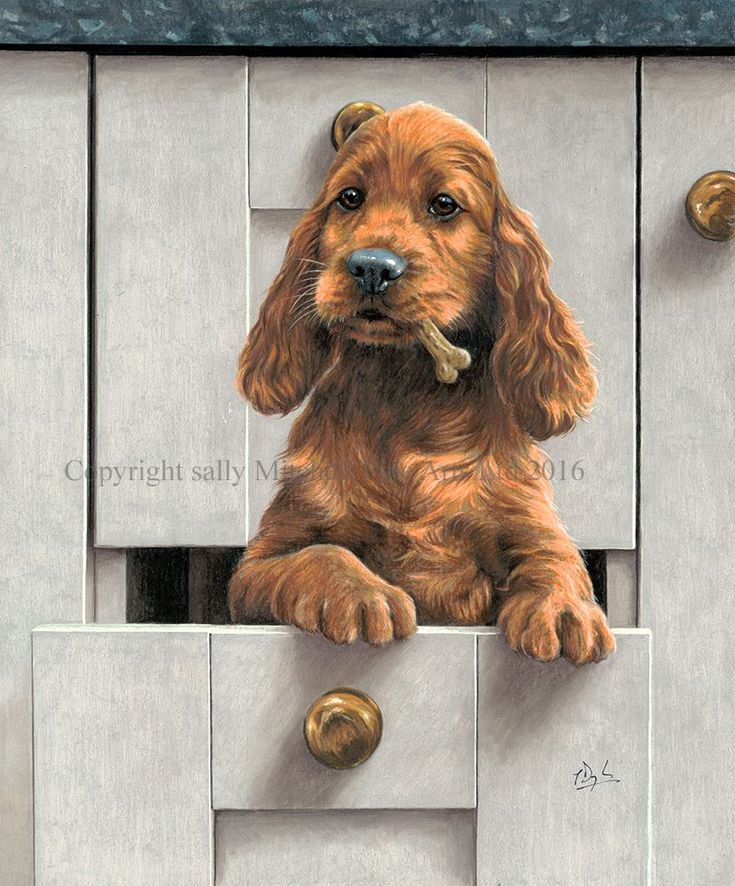Irish Setter Print - Luck of The Drawer - by Paul Doyle