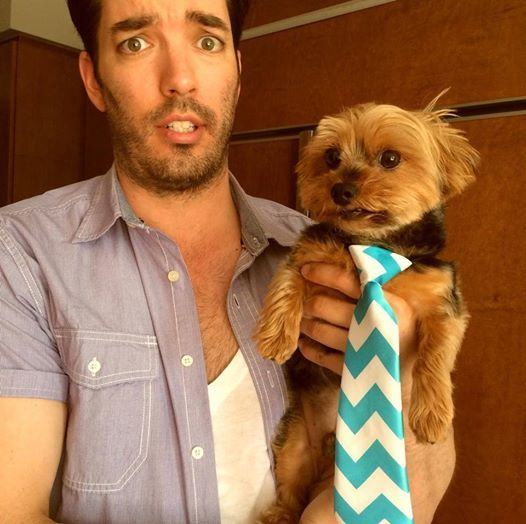 Jonathan Scott's Dog Stewie Dressed As His Brother Drew Scott...Too Cute @mrsilverscott @mrdrewscott