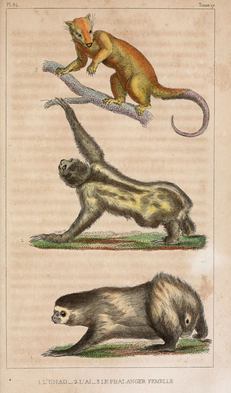 373 best images about vintage illustration animals on - Animal dessin ...