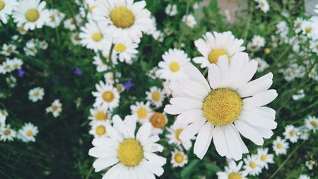 Daisy, daisy • b r o o nyc o • EyeEm