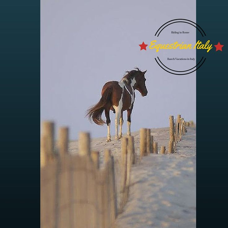 55 best Equestrian Italy - Your travel agency for adventure in ...