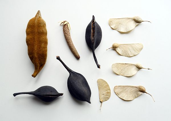 ++ Seed Pods - Camilla Engman