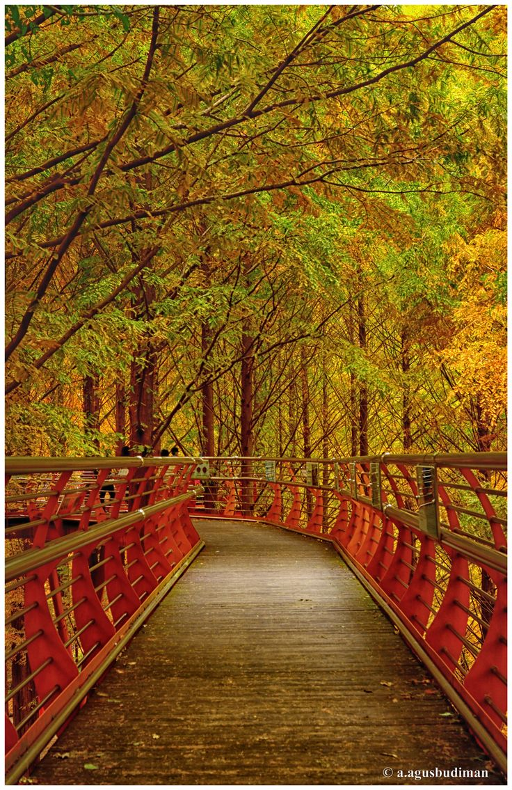 This is one of the spot that you can enjoy if you are visiting Jangtaesan (장태산자연휴양림) which located near Daejeon, South Korea.