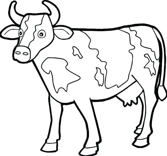 Cow Coloring Pages In 2020 Cow Coloring Pages Farm Animal