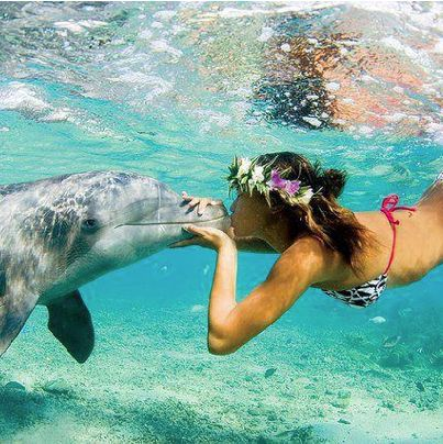 Swimming and interacting with dolphins at Sea Life Park Hawaii, Honolulu http://www.hawaiiactive.com/category/oahu-cat-sealife.html