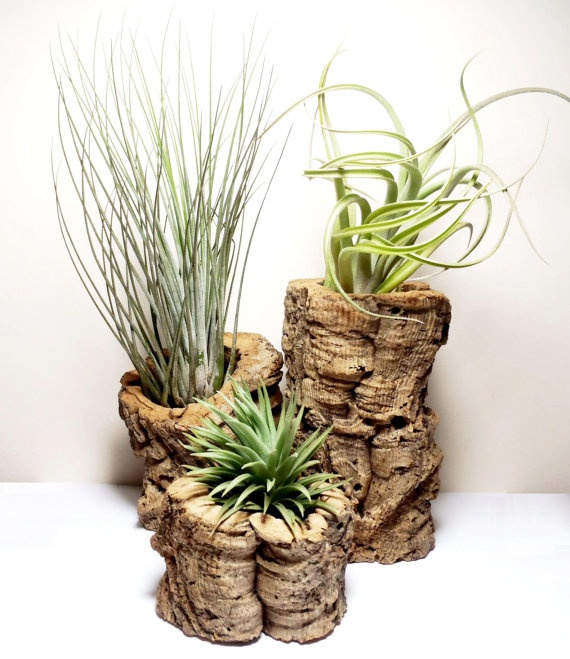 Air plant and cork tabletop set: three handmade cork pots for tillandsias