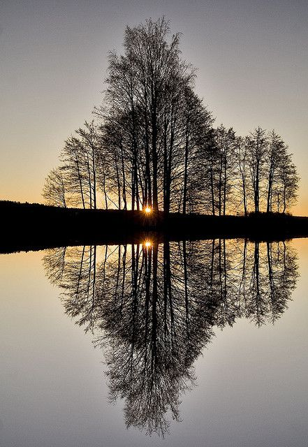 Perfect reflection: Lights, Water Reflection, Winter Trees, Sunsets, Silhouette, Beautiful, Pictures, Mirror Image, Photography