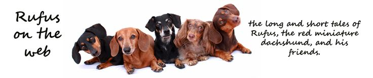 rufusontheweb | Where it is all about the dachshunds! | Page 28