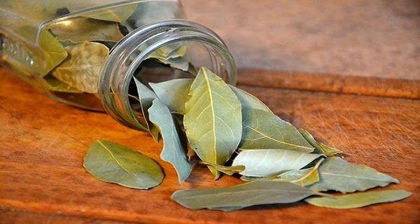 Brûlez des feuilles de laurier dans la chambre et découvrez ce qui arrive en seulement 10 minutes. ~ Protège ta santé