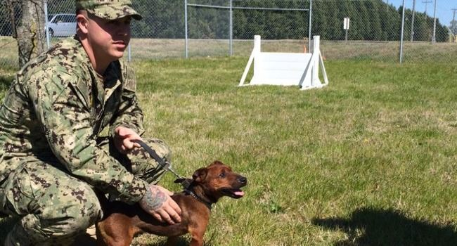 Tiny Dog, Big Job: Pusko's On Patrol at the World's Largest Naval Base http://www.lifewithdogs.tv/2017/05/tiny-dog-big-job-puskos-on-patrol-at-the-worlds-largest-naval-base/?utm_campaign=crowdfire&utm_content=crowdfire&utm_medium=social&utm_source=pinterest