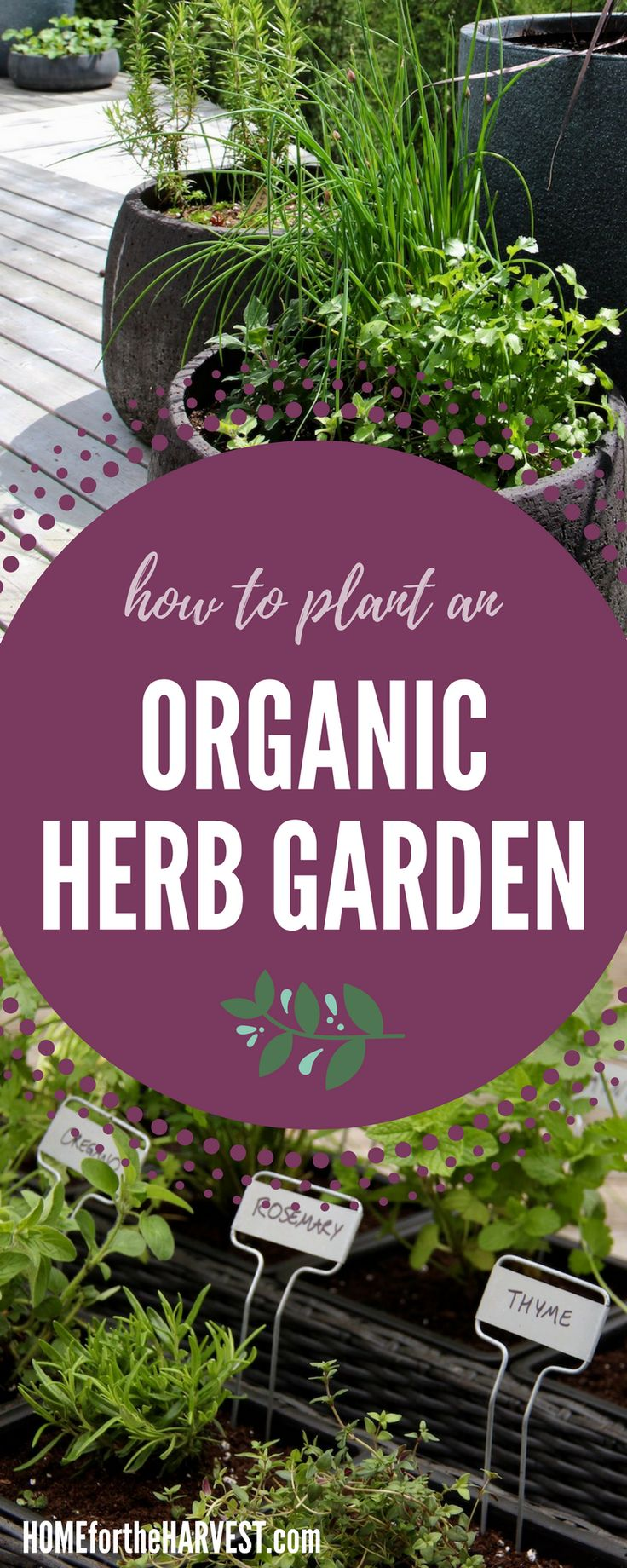 I love my new herb garden! This tutorial will show you exactly what you need for the perfect organic herb garden, including the steps to finding organic supplies and how to plant your herbs | from Home for the Harvest