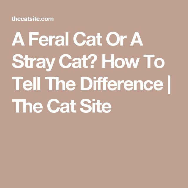 A Feral Cat Or A Stray Cat? How To Tell The Difference | The Cat Site