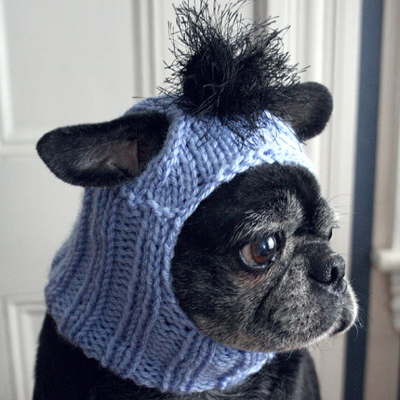 Puppy Dog Hat Knitting Pattern : Pin by Amy Haid Spence on Pug pics Pinterest