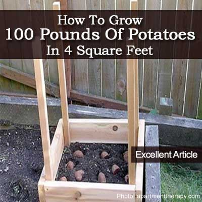 How to Grow 100 Pounds Of Potatoes In 4 Square Feet -