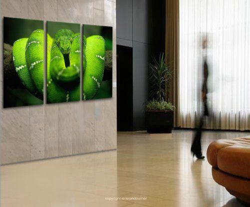 149 best Schlangen Snakes images on Pinterest Snakes - leinwand für wohnzimmer