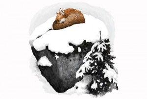 Kettu voi käpertyä avaralle paikalle lepäämään, mutta sillä on aina korvat höröllä. Kuvitus: Tom Björklund