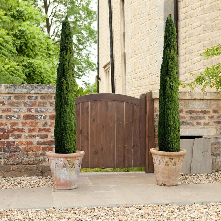 Pair of Italian Cypress Trees 1.2 -1.4m tall potted plants: Amazon.co.uk: Garden & Outdoors