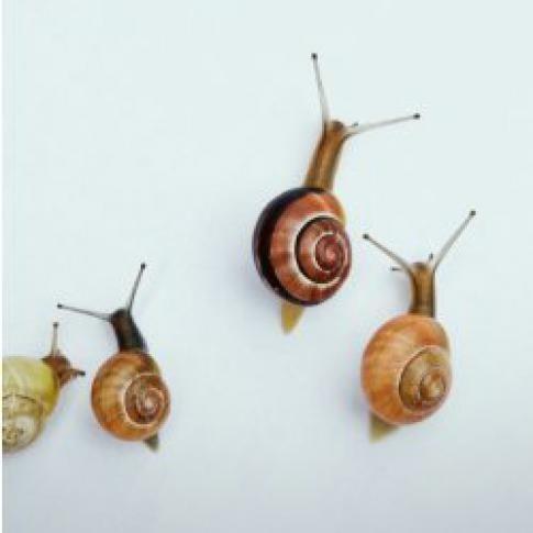 Le protocole de l'Opération escargots | Vigie-Nature École