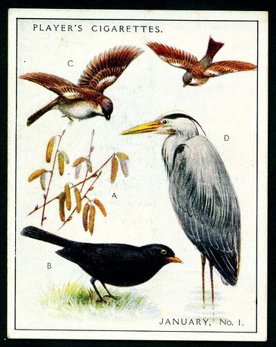 """Player's Cigarettes  """"A Nature Calendar"""" (series of 24 large cards issued in 1930) #1 January (1)"""