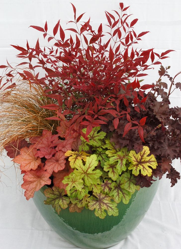 Spice up a container or plant pot with the color of a heuchera perennial