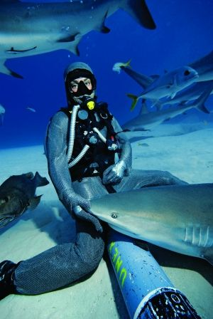 I went shark diving in the Bahamas, but I wasn't allowed to touch them. The sharks I dove with were between 4-6 feet long!