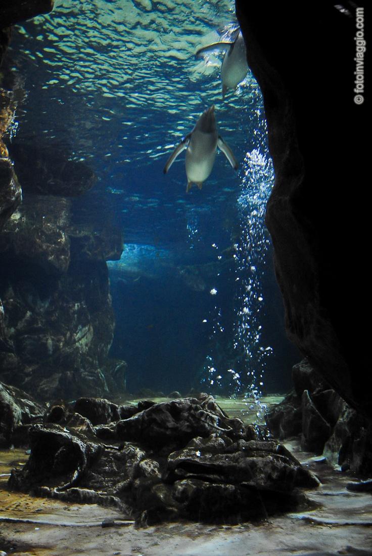 Foto Dell' Acquario Di Genova - Galleria fotografica dell'Acquario di Genova. Scopri cosa ti aspetta nelle grandi vasche dell'acquario più grande ed importante d'Italia.