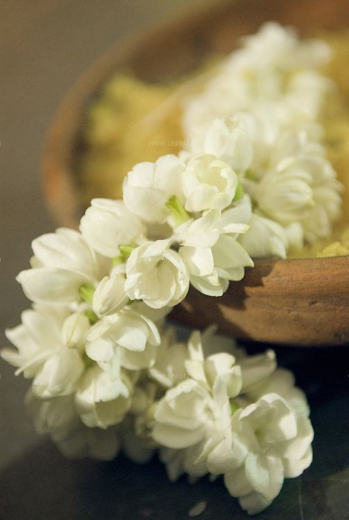 Jasmine flowers are very native to Tamil Nadu and are considered very auspicious for a bride. Check if you can incorporate this at the venue or generally have it as a fragrance guideline. This combined with Sandalwood and Rose water is a very uplifting fragrance.