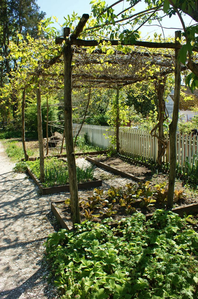 Wooden grape arbor with veggie beds underneath | by KarlGercens.com GARDEN LECTURES
