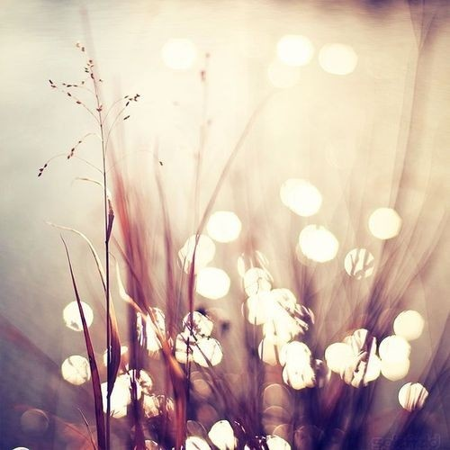 Sunlight SparklesThoughts, Remember This, Heart, Trav'Lin Lights, Soft Lights, Wisdom Quotes, Soul Search, Inspiration Quotes, Backgrounds Image