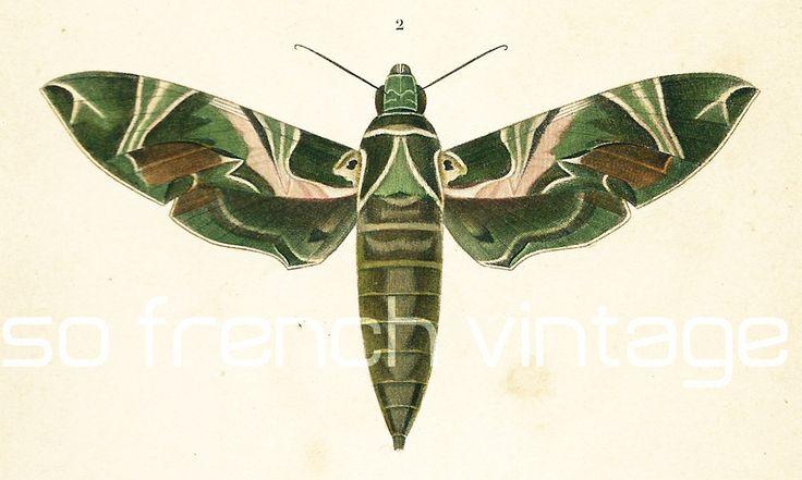 1861 Papillons Sphinx, gravure ancienne Ch. d' Orbigny, Original  Hist. Naturelle, Lithographie peinte à la main, Entomologie, Lépidoptères de la boutique sofrenchvintage sur Etsy