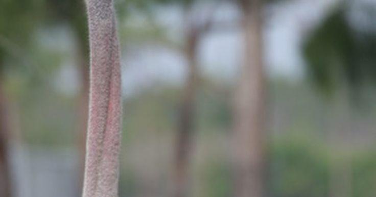 Adaptación del avestruz. Aunque el avestruz es el ave más grande del mundo, aún debe luchar por sobrevivir en los severos desiertos de África. Con el paso del tiempo, los avestruces se han adaptado para ayudar a modificar su forma de superviviencia. Tales adaptaciones incluyen cambios en el tracto digestivo, en las alas, protección sobre el joven, patas, colorido y ...