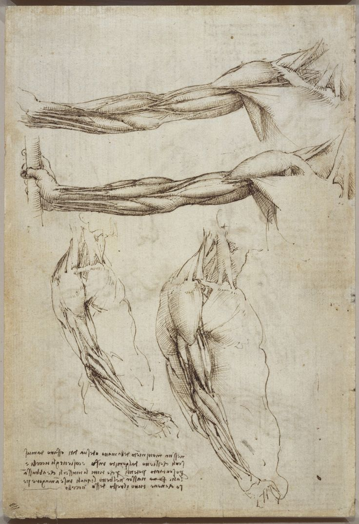 Recto: The bones of the foot, and the shoulder. Verso: The veins and muscles of the arm | The Royal Collection