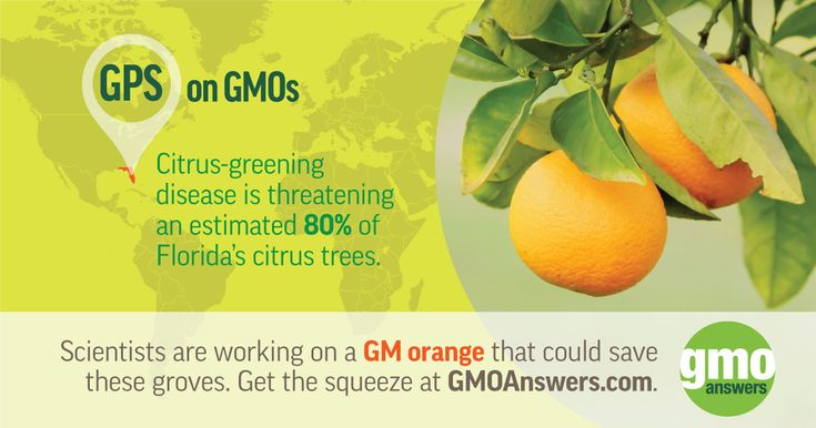 Scientists are working on a GM orange that could save these groves. Get the squeeze at GMOAnswers.com
