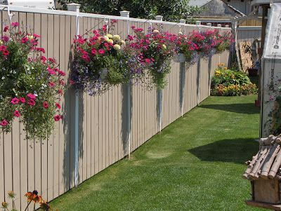 Hanging baskets along privacy fence. Great for when you don't want a flower bed but want more than grass in your yard.