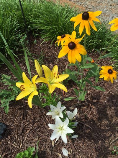 17 Best Images About Companion Planting On Pinterest 400 x 300