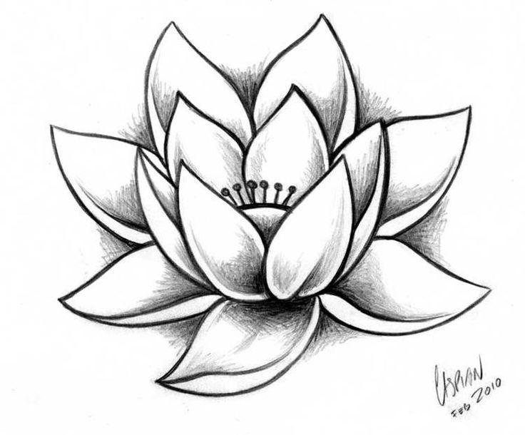 Lotus-Tattoo_Web.jpg | Dessin lotus, Dessin fleur, Dessin fleur de ...