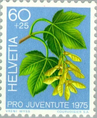 Znaczek: Great Maple (Acer pseudoplatanus) (Szwajcaria) (Pro Juventute: Ornamental plants of the forest, stamp day) Mi:CH 1066,Sn:CH B438,Yt:CH 998,Sg:CH J253,Un:CH 998,Zum:CH J256