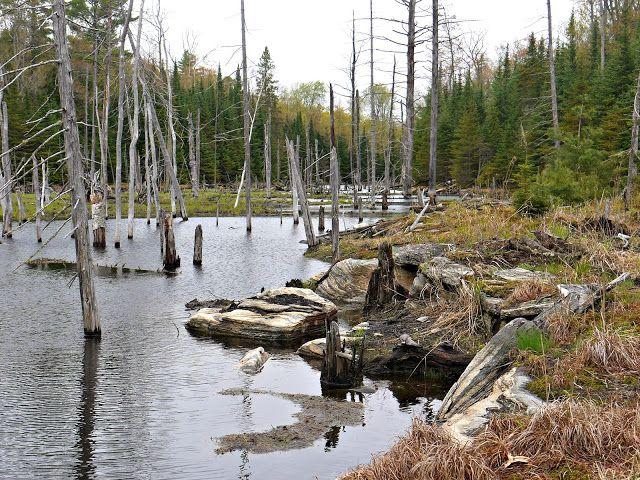 Swamp in Haliburton Highlands, Ontario