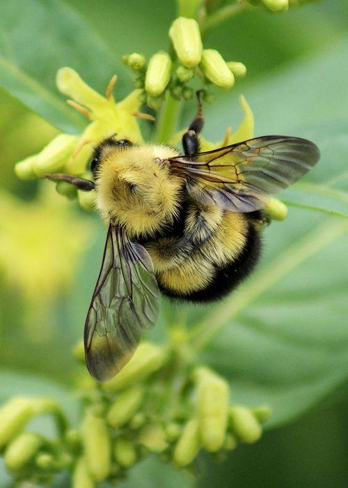 The Bee Song Lyrics
