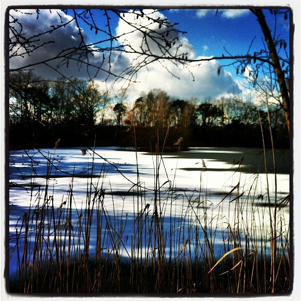 Ice and snow on a small lake near Boekelo Enschede - @marcel_tettero- #webstagram